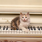 CAT 03 RK1518 01