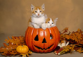 CAT 03 RK1538 03