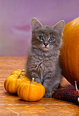 CAT 03 RK1548 12