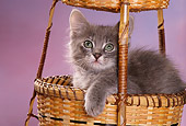 CAT 03 RK1555 22