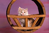 CAT 03 RK1557 01