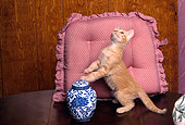 CAT 03 RK1570 04