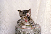 CAT 03 RK1581 01