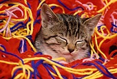 CAT 03 RK1586 31
