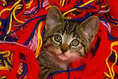 CAT 03 RK1586 44