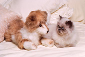 CAT 03 RK1638 17
