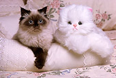 CAT 03 RK1642 04
