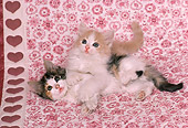 CAT 03 RK1649 03