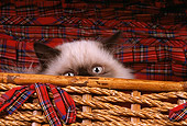 CAT 03 RK1672 01