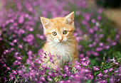 CAT 03 RK1699 04