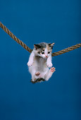 CAT 03 RK1700 01
