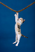 CAT 03 RK1700 08