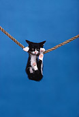 CAT 03 RK1701 02