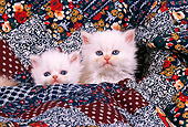 CAT 03 RK1702 01