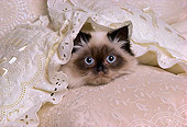 CAT 03 RK1730 36
