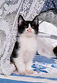 CAT 03 RK1735 11