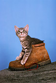 CAT 03 RK1753 12