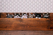 CAT 03 RK1760 04