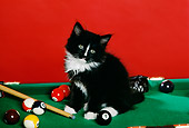 CAT 03 RK1761 01