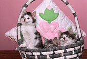 CAT 03 RK1775 08