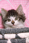 CAT 03 RK1776 03