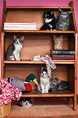 CAT 03 RK1780 11