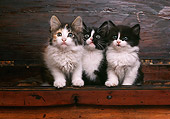CAT 03 RK1781 18