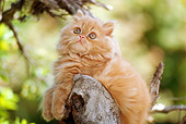 CAT 03 RK1789 05
