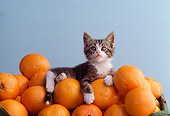 CAT 03 RK1812 15