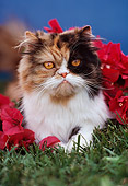CAT 03 RK2000 06