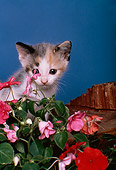 CAT 03 RK2005 07