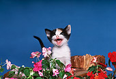 CAT 03 RK2006 11