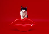 CAT 03 RK2095 25