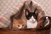 CAT 03 RK2099 08