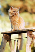 CAT 03 RK2109 06