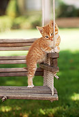 CAT 03 RK2123 01