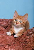 CAT 03 RK2144 03