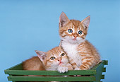 CAT 03 RK2179 17