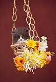 CAT 03 RK2184 15