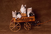 CAT 03 RK2186 17