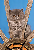 CAT 03 RK2189 08