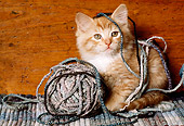 CAT 03 RK2205 87