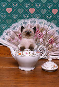 CAT 03 RK2224 01