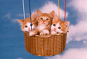 CAT 03 RK2233 51