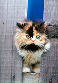 CAT 03 RK2238 04