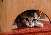 CAT 03 RK2264 02
