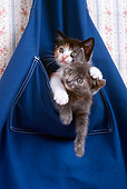 CAT 03 RK2272 19