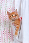 CAT 03 RK2282 01