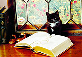 CAT 03 RK2373 10