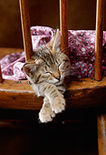 CAT 03 RK2384 17